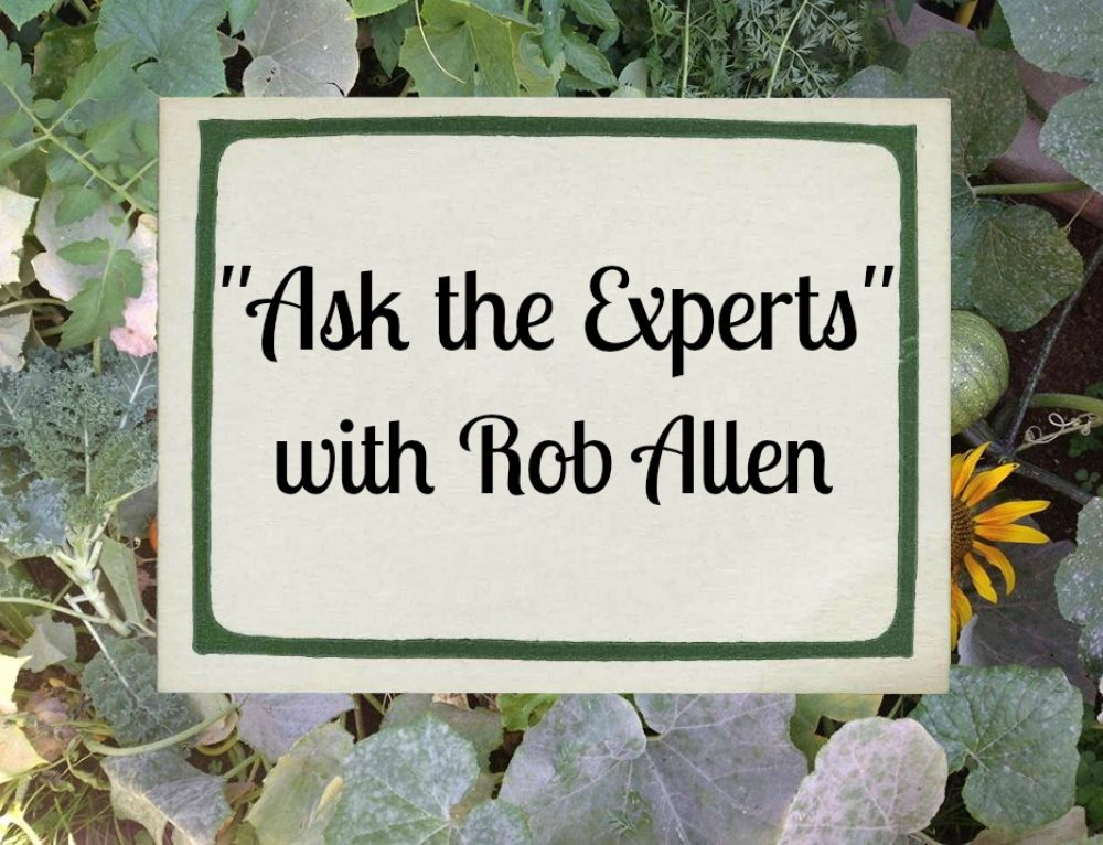 Ask the Experts: Rob Allen